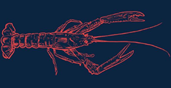 scampi-icelandpelagic